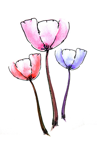 Watercolor Poppy Flower Painting