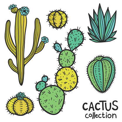 Cactuses Hand Drawn Abstract Natural Collection