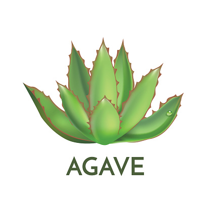 Agave plant green flower logo colorful vector illustration