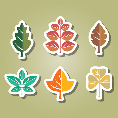 set of color icons with different leaves for your design