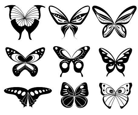 Vector butterfly set. Butterfly colorful different types