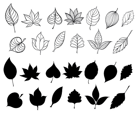 Vector set of leaves, collection of hand-drawn leaves.