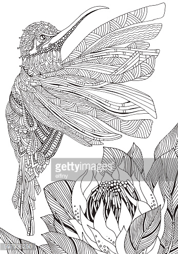Sunbird. Artistic Bird and Protea flower. Coloring Book page