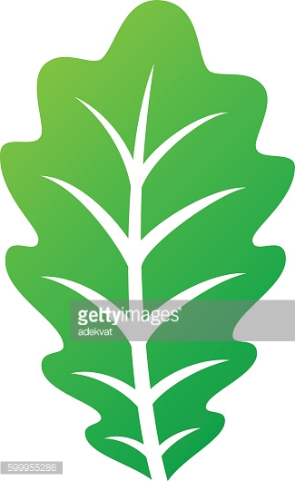 Leaf icon vector illustration.