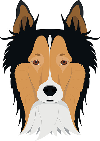 Collie Rough dog isolated on white background vector illustratio