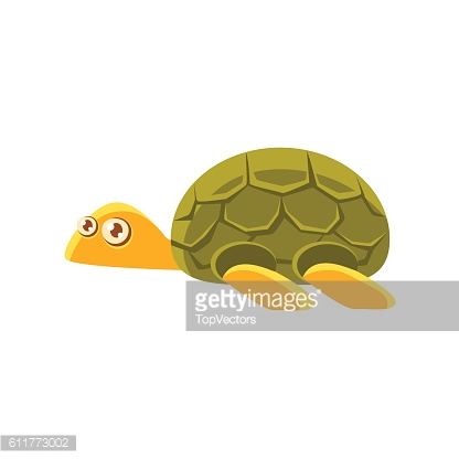 Turtle Toy Exotic Animal Drawing