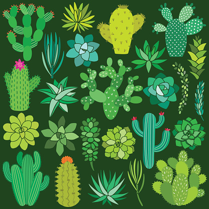 Cactus and succulent flower set. Hand drawn plant collection. Vector