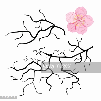 set of Japanese cherry branches. vector illustration