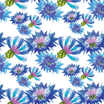 seamless pattern field flowers cornflower. vector illustration
