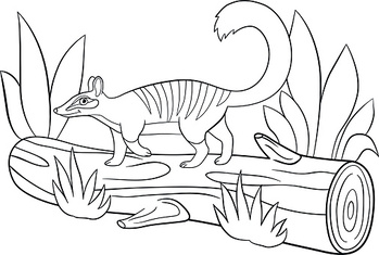 Coloring pages. Little cute numbat walks on the log.