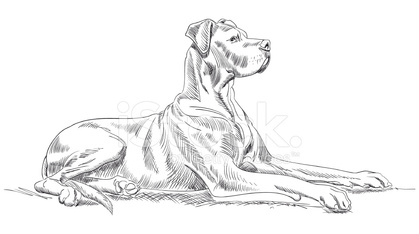 Great Dane Dog Sketch stock photos - VectorHQ.com