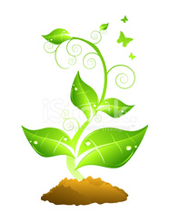 Green plant and brown soil
