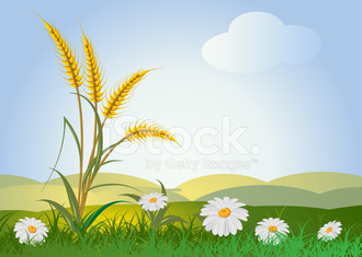 ears of wheat with flowers