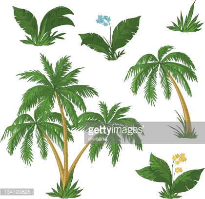 Palm trees, flowers and grass