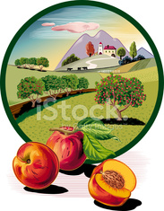 Peach trees in oval frame