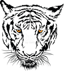 Tiger face black and white with the yellow eye.