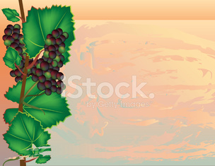 grape vine climbing along abstract background