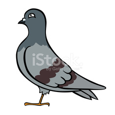 cute vector pigeon
