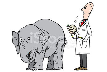 Scientist and elephant