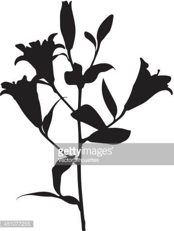 Lilies Silhouette