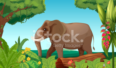 Big elephant in the jungle