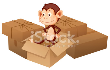 smiling monkey and boxes