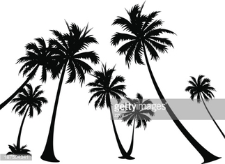 vector icon palm tree silhuoette