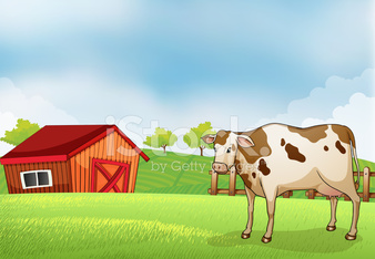 cow in the farm with a barn house