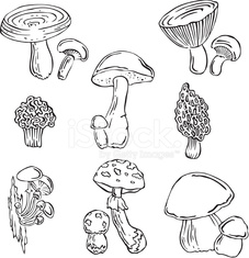 Vector silhouettes of various fungi