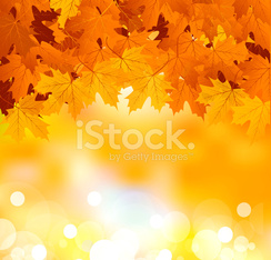 autumn leaves on a bright sunny background