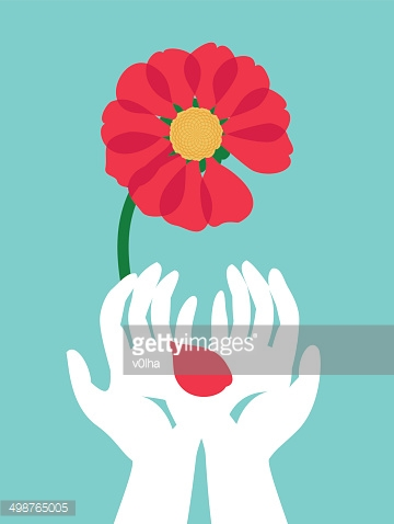 Hands in surgical gloves holding a red flower petal