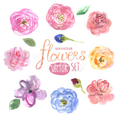 Watercolor flowers in vector