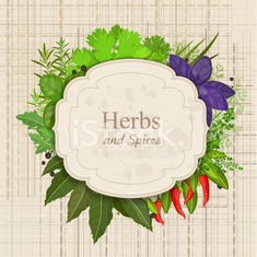 Vintage card with herbs and spices on canva