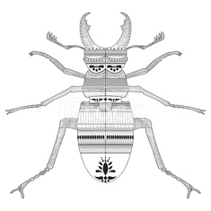 Hand drawing a beetle with elements of ornament vector