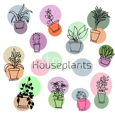 Vector design set of house plants in colorful circles