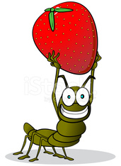 Ant carrying a Strawberry
