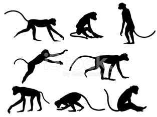 Monkey Silhoutte Collection