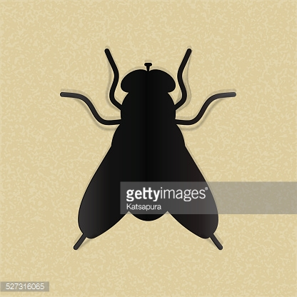 Black silhouette of a fly on yellow paper