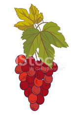 Bunch Of Grapes On White