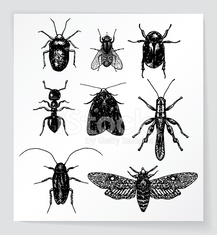 Set of various bugs and insects