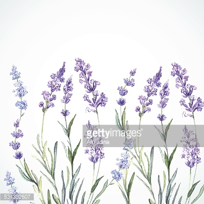 Watercolor background of Lavender