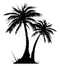 Two palm trees - VECTOR