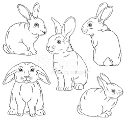 Cute bunny outlined sketches