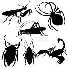 Vector silhouette of various insects