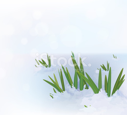 Vector grass in snow.