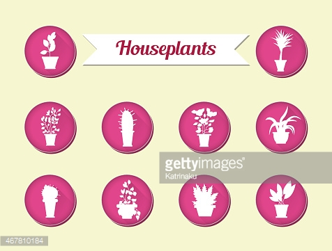 Set of flat vector icons. House plants.Illustration