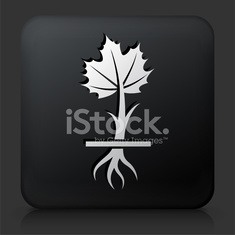 Black Square Button with Growing Plant