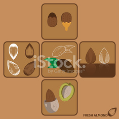 Almond Vector and Icon