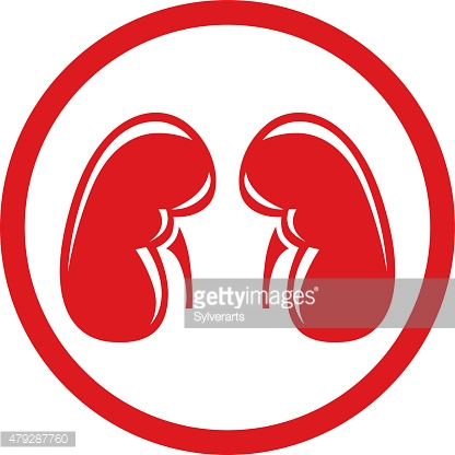 Human Kidney. Single flat icon. Vector symbol.