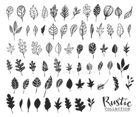 Hand drawn vintage leaves. Rustic decorative vector